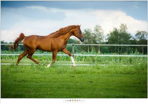 In draf evenwijdig voorbij rennen is redelijk makkelijk te fotograferen (130mm - ISO800 - f/2,8 - t=1/5000)