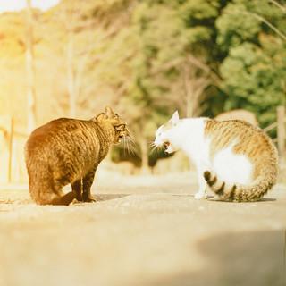 喧嘩やめて、仲良くしてね