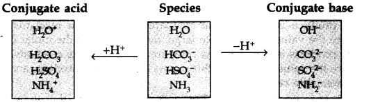 ncert-solutions-for-class-11-chemistry-chapter-7-equilibrium-63