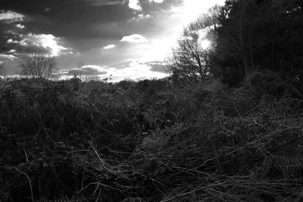 Ansel Adams Landscape Ansel Adams Inspired Landscape