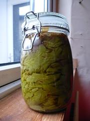 beech leaf noyau recipe