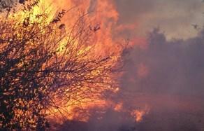 Photo of brushfire