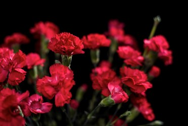 Image result for red carnations