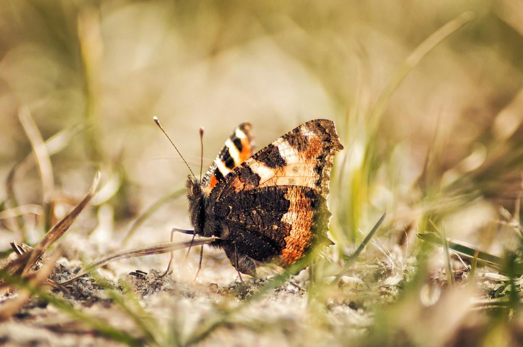 Butterfly 14.03.2015