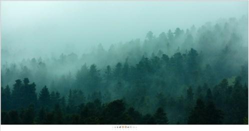 Vroeg opstaan loont. De ochtendmist hangt over de heuvels en tussen de bossen. Het is het uitzicht vanaf La Fougeraie voor dag en dauw, wanneer de wereld nog in diepe rust is.