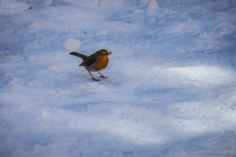 Demostración de balance de blancos automático cuando haces fotos en la nieve