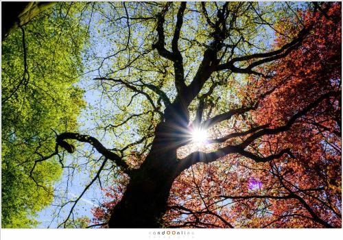 Het kleurrijke blad van de bomen wordt pas echt mooi in tegenlicht. (ISO200 - f/16 - 1/80sec, Velvia film simulation)