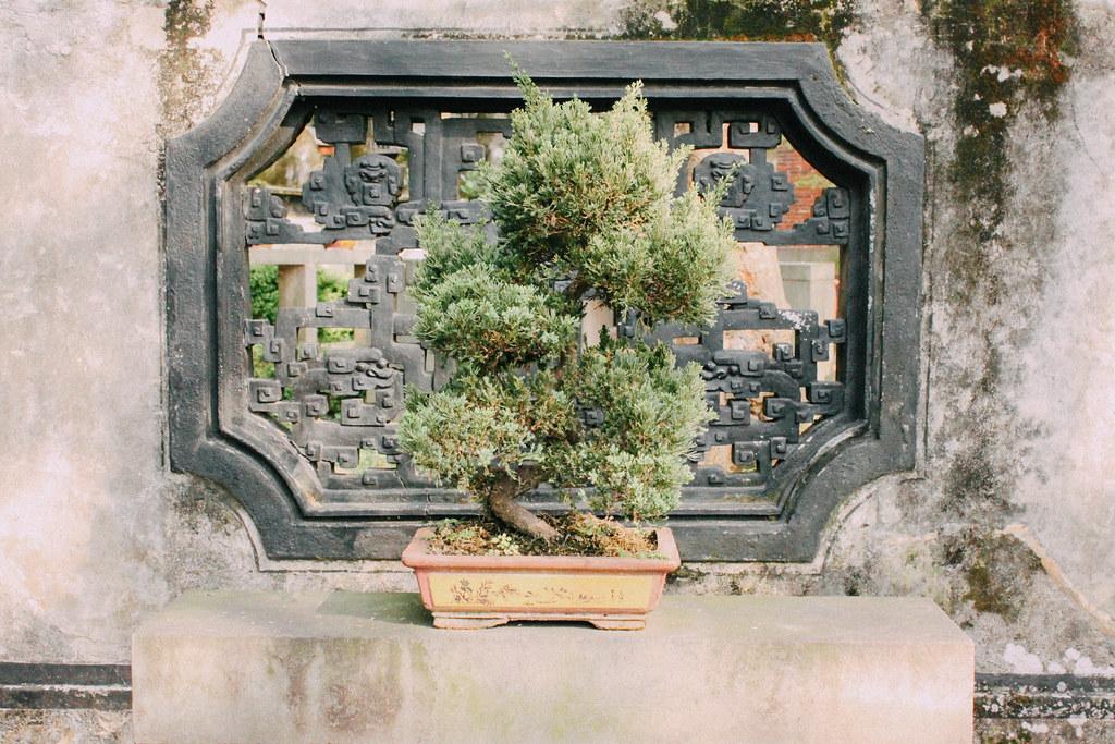Numerosos bonsais pueblan los Jardines de la familia Lin
