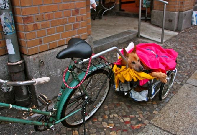 Berliinin koirat