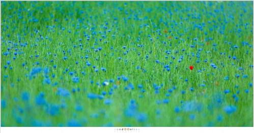 Een klein beetje rood in een veld van groen en blauw (200mm - ISO200 - f/2,8 - 1/80sec)