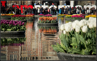 Tourists and tulips