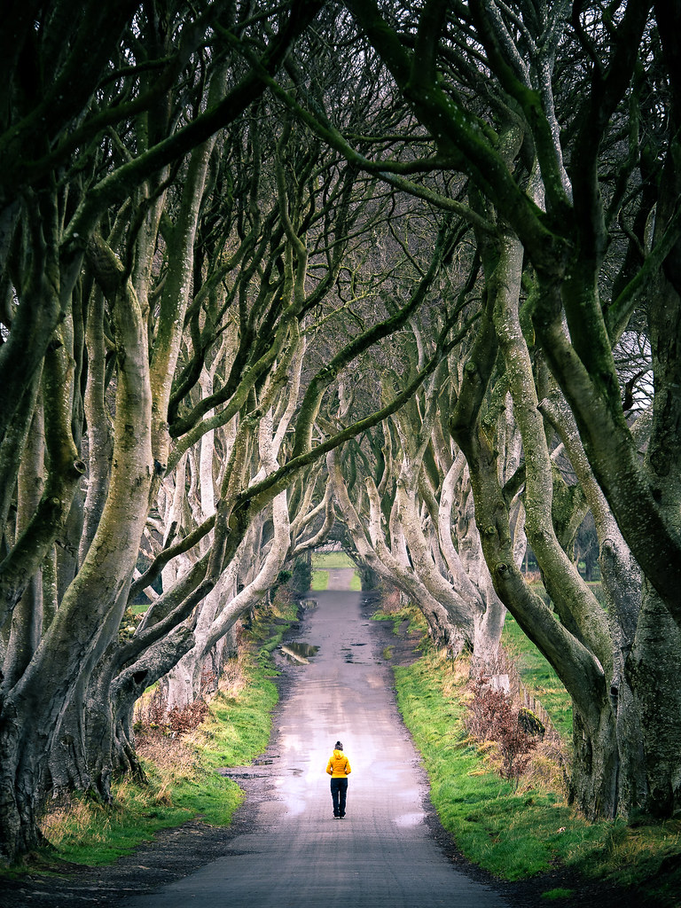 The Dark Hedges Northern Ireland Travel Photography