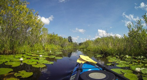 Lowcountry Unfiltered at Okefenokee-57