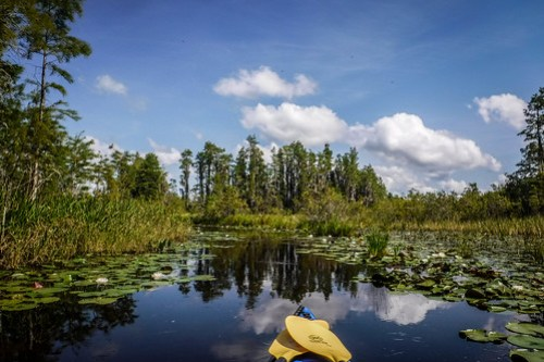 Lowcountry Unfiltered at Okefenokee-078