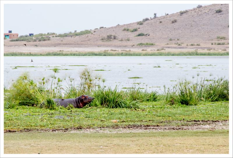 Amboseli-98