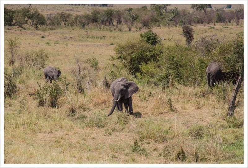 MasaiMara-154