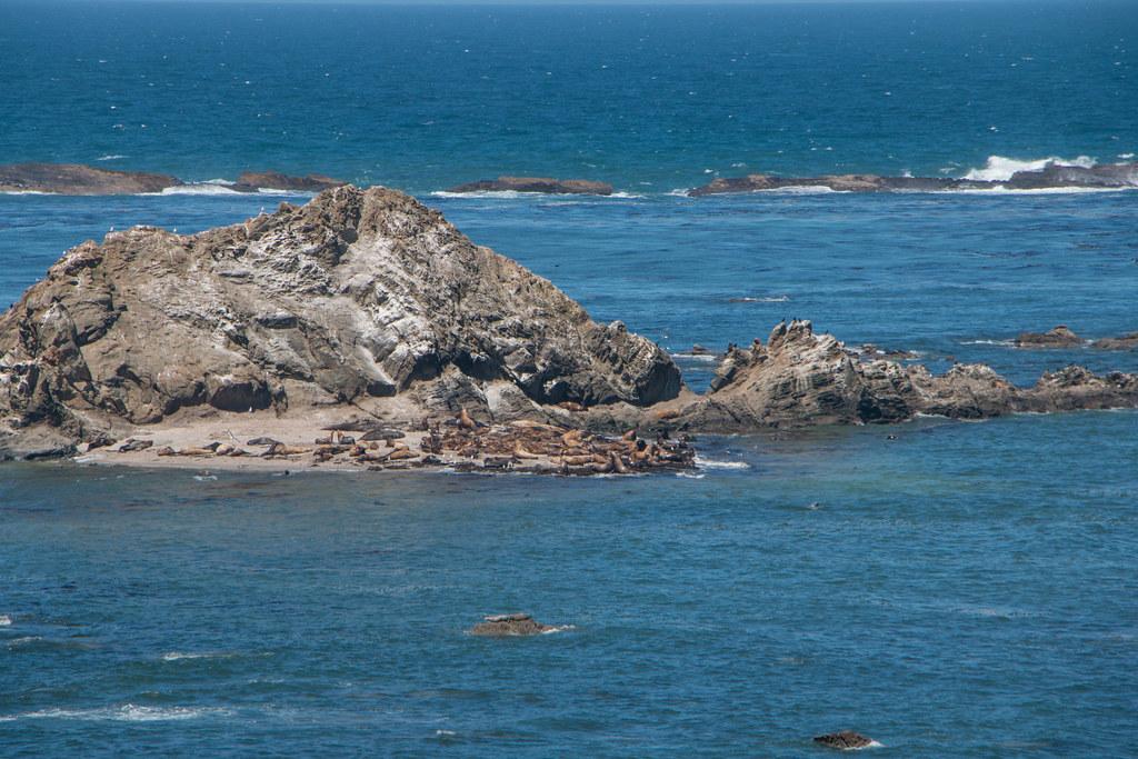 07.04. Cape Arago