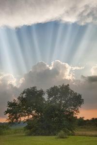 Monte Nagler Evening Sunbeams