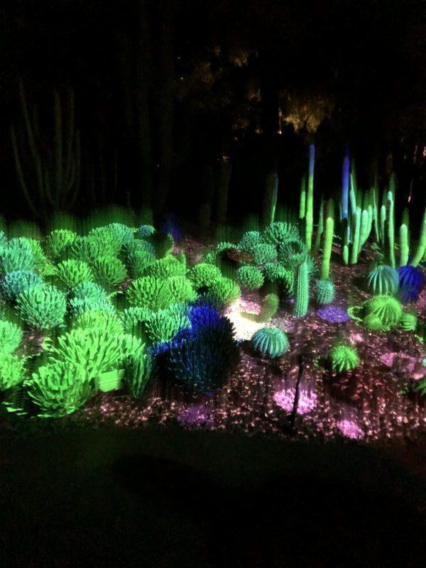 Light show of cacti at the Phoenix Botanical Gardens.