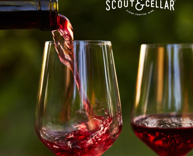 scout and cellar wine tastings