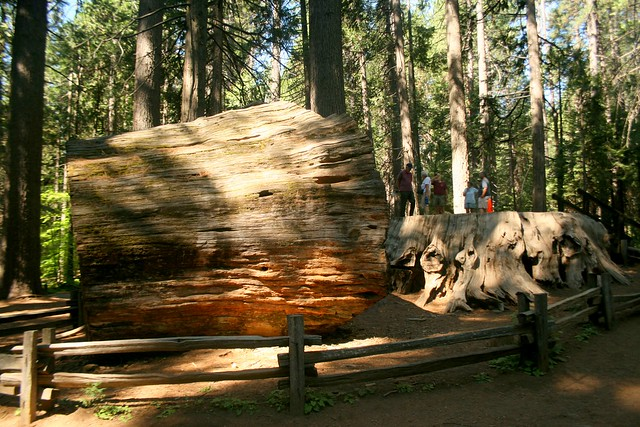 Calaveras Big Trees State Park stump