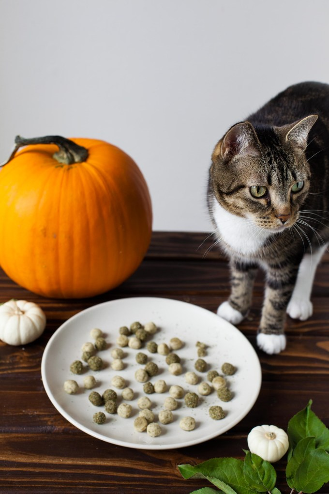 Mini Kitty Pumpkin Spice Doughnut Holes (Yes, For Your Cat!) with Bisou the Cat by Kayleigh Kosmas