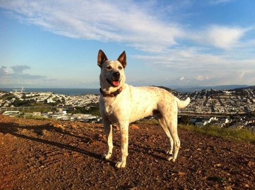 Sam, on Bernal Heights