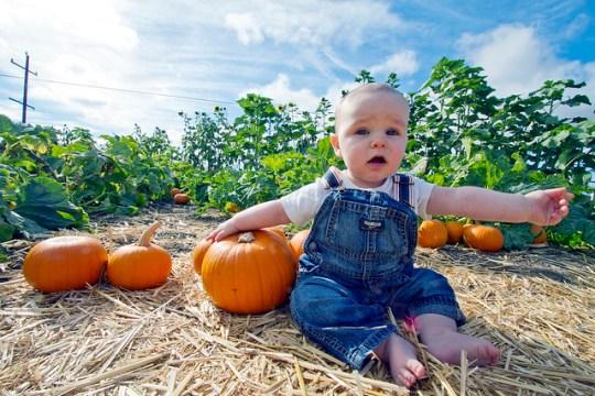 I want a pumpkin this big