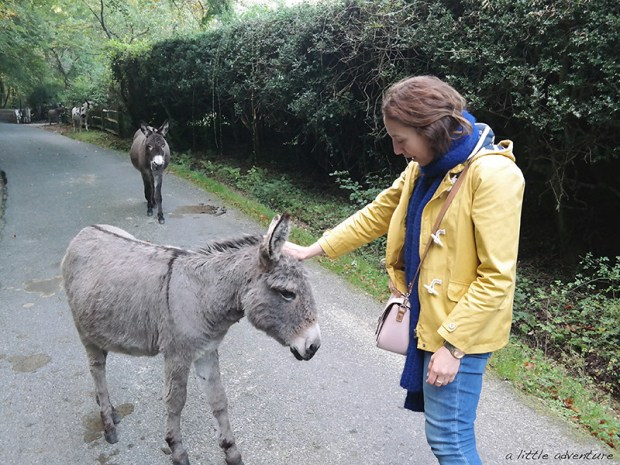 Meeting some New Forest donkeys.