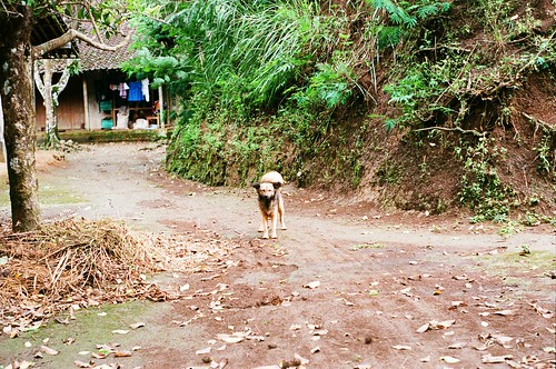 Friendly Dog At Menoreh Hill Village