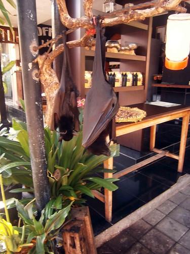 Fruit Bats at Tanah Lot Bali