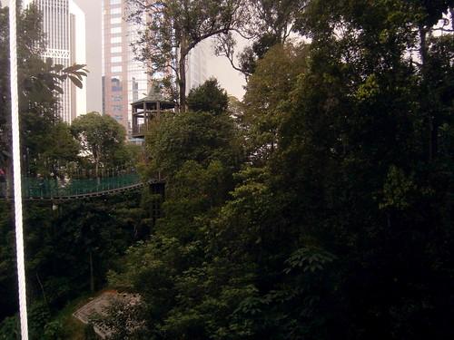 Canopy Walk at Bukit Nanas