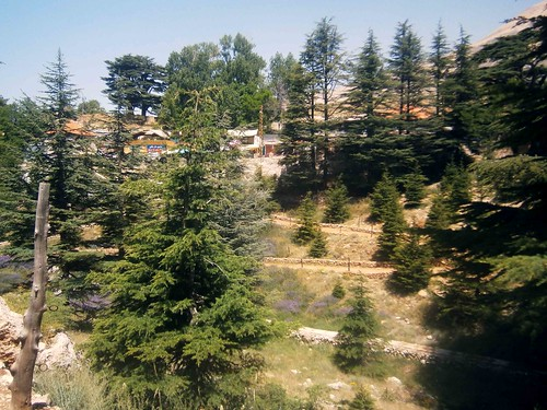 Cedars of God Grove