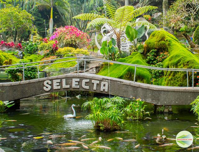 Selecta-24