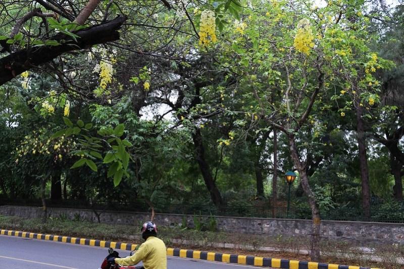 City Season - Amatlas in Decline, Amrita Shergil Marg