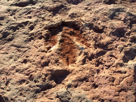 Tuba City Dinosaur Footprints