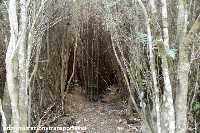 Parque Nacional Chiloé | Tepuales