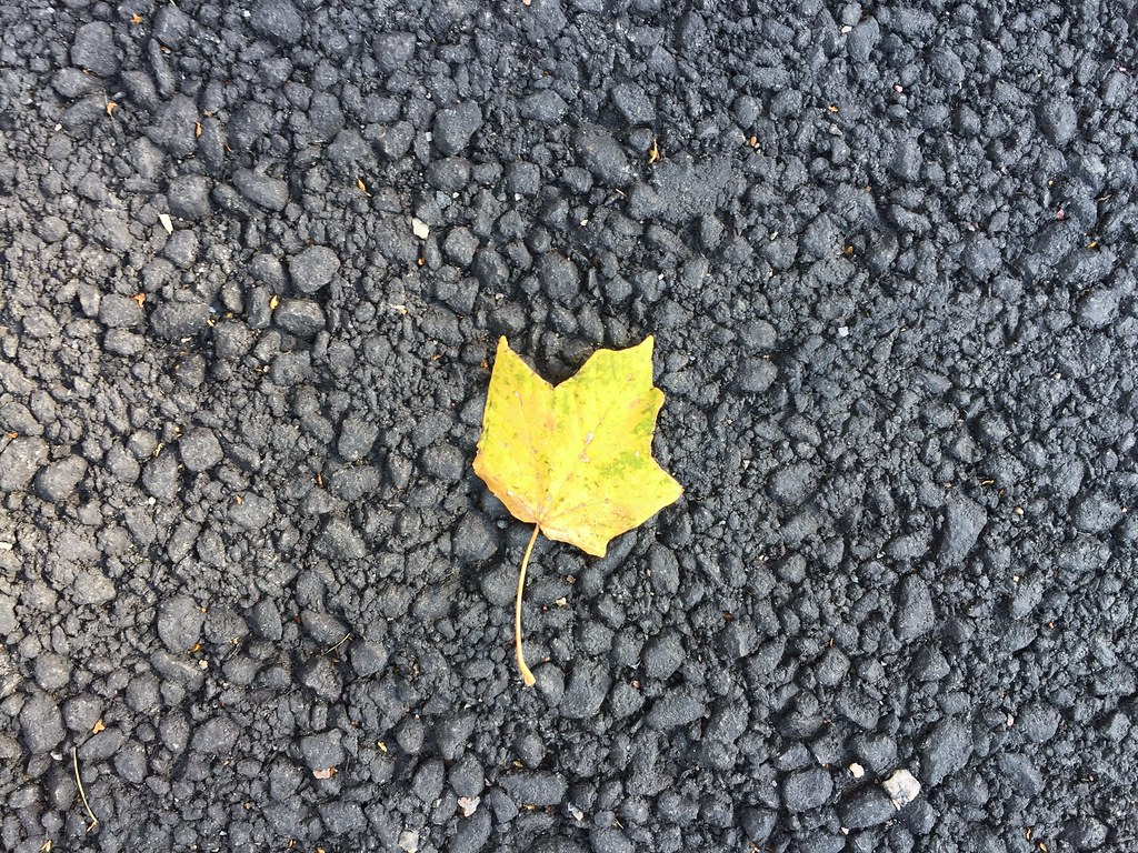 yellow leaf autumn