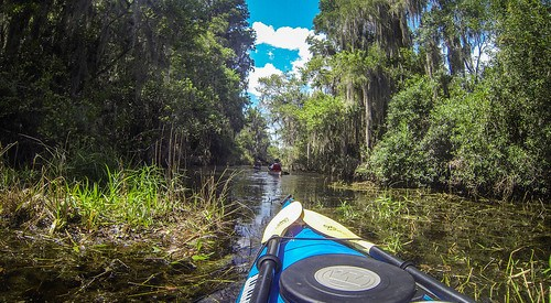 Lowcountry Unfiltered at Okefenokee-77