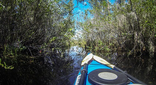 Lowcountry Unfiltered at Okefenokee-111