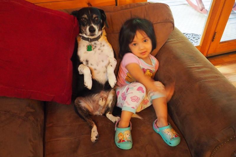 louis-beagle-dog-toddler-niece-23