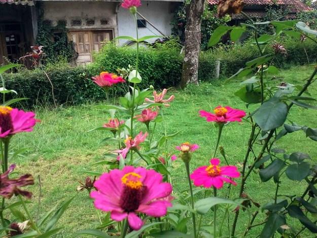 Homestay Garden