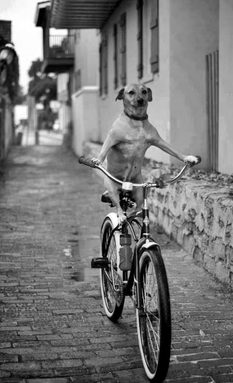 Velo-Canine