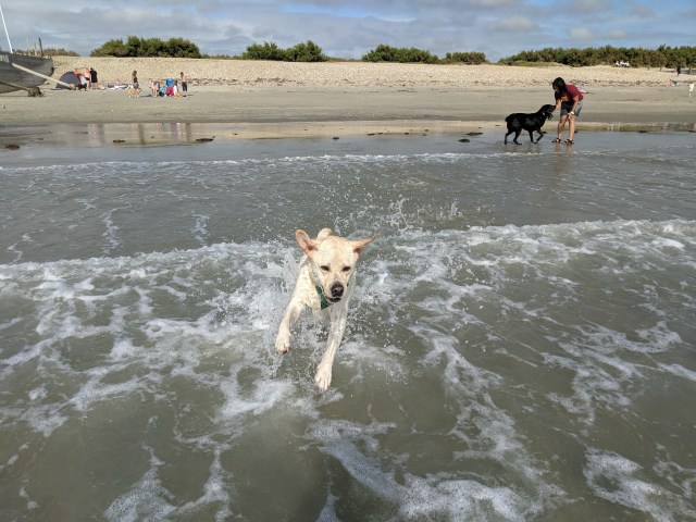 Fun in the waves at West Wittering