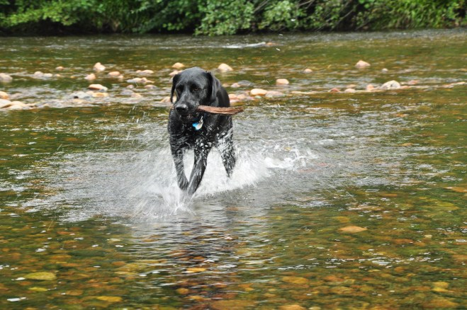Stick fishing in the Rydal river