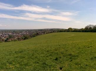 View on Chewie's morning walk - towards Newlands corner