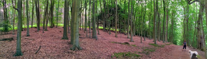 Chantries woods, Guildford