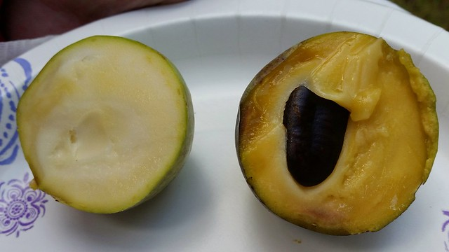 Pawpaw innards (less ripe and more ripe)