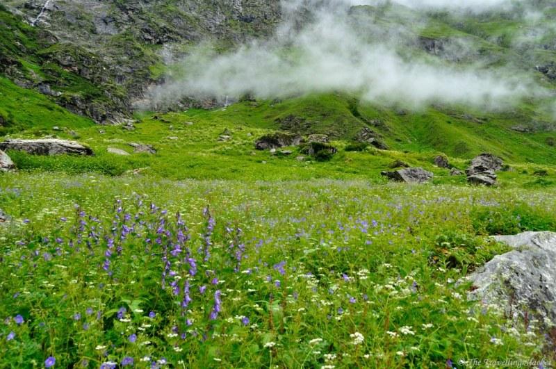 valley of flowers uttaranchal