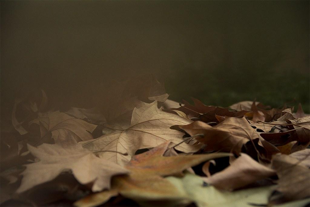 07 A ras de otoño